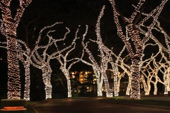 The Beautiful Lights at the Grand Wailea