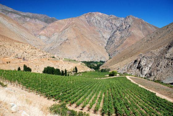 Drinking Chilean Wine